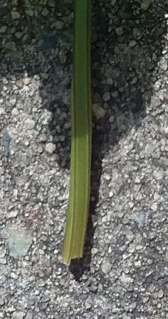 square stem
